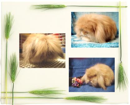 Карликовые кролики из Никиного Дома и не только :) Kollazhangorbarany