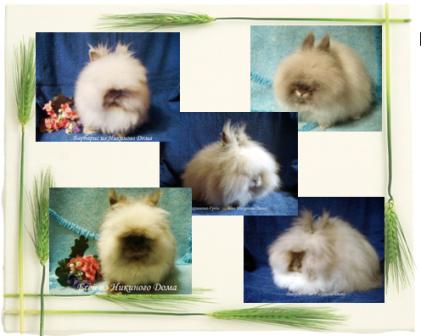 Карликовые кролики из Никиного Дома и не только :) Kollazhangorcy