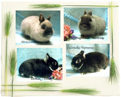 Карликовые кролики из Никиного Дома и не только :) Kollazhcvetnye