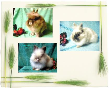Карликовые кролики из Никиного Дома и не только :) Kollazhlvjata
