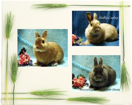 Карликовые кролики из Никиного Дома и не только :) Kollazhsatinovye